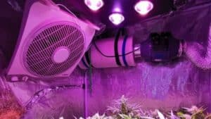 Best 5X5 Grow Tent Setup (Fan, Filter & Light) to Get More Yield