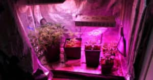 Best Small Grow Tent 2x2 or 3x3 Setup (Fan, Filter &; Light) To Maximize Yield