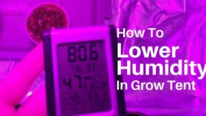 grow tent humidity too high? Here How To Lower Humidity In Grow Tent