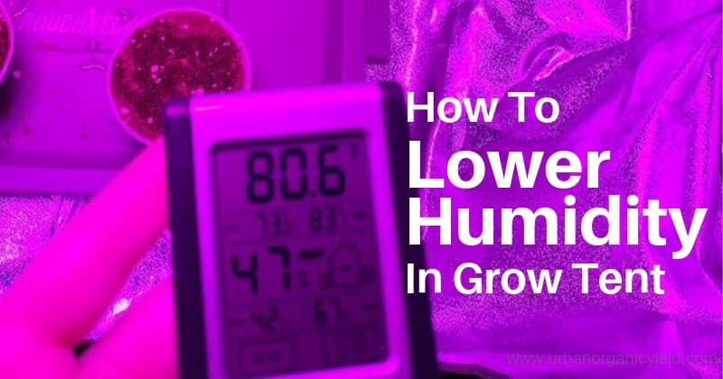 Grow Tent Humidity Too High Here How To Lower Humidity In Grow Tent