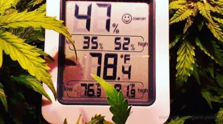 How To Increase Humidity In Grow Tent 12 Easy And Cheap Ways To Make It Happen!