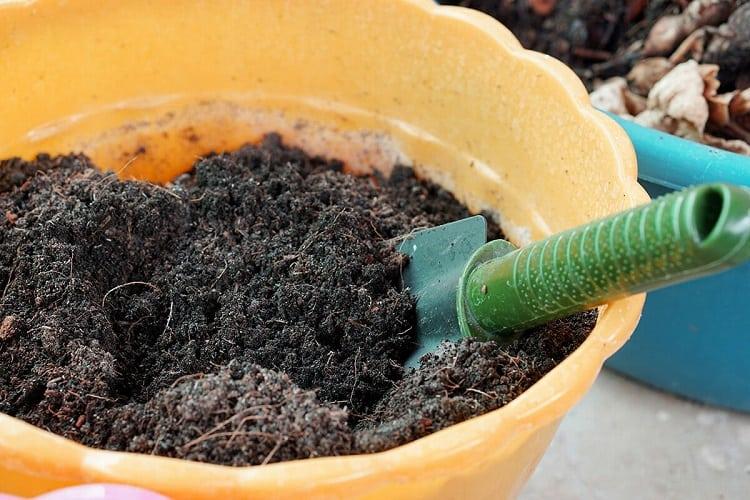 Soil in Bucket