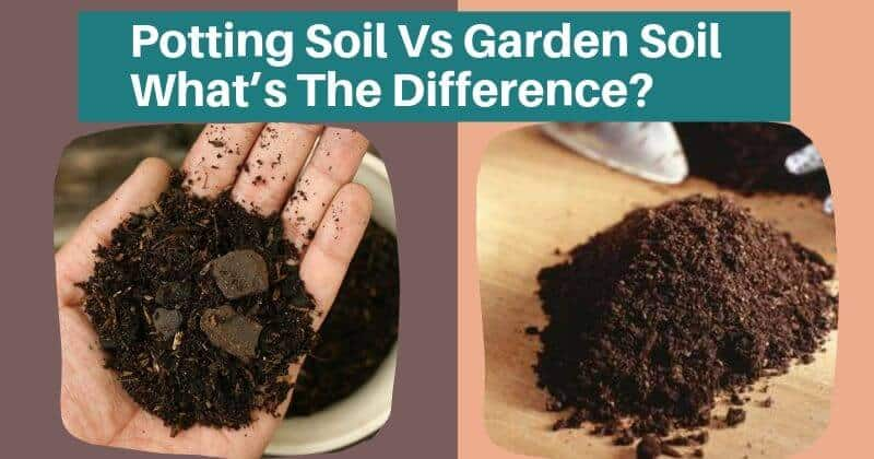 Potting Soil Vs Garden Soil_ What's The Difference_ Can I Use Garden Soil In Pots| difference between topsoil and potting soil