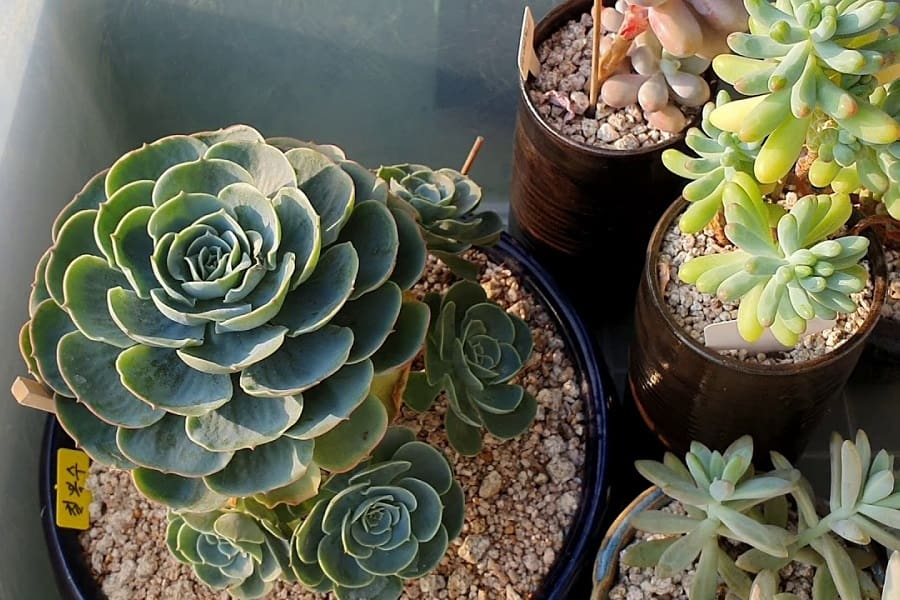 How Fast Do Succulents Grow And How To Grow Them Faster