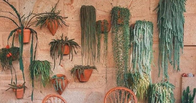 The 20 Best Trailing & Hanging Succulents _With Pictures_ That Thrive In Apartments