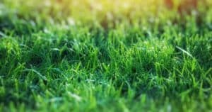 The 4 Out-of-the-Box Ways to Water Lawn Without a Sprinkler System