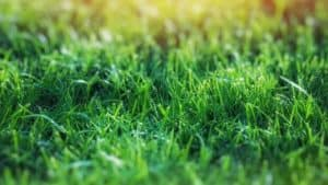 4 Ways to Water Your Lawn Efficiently without a sprinkler system