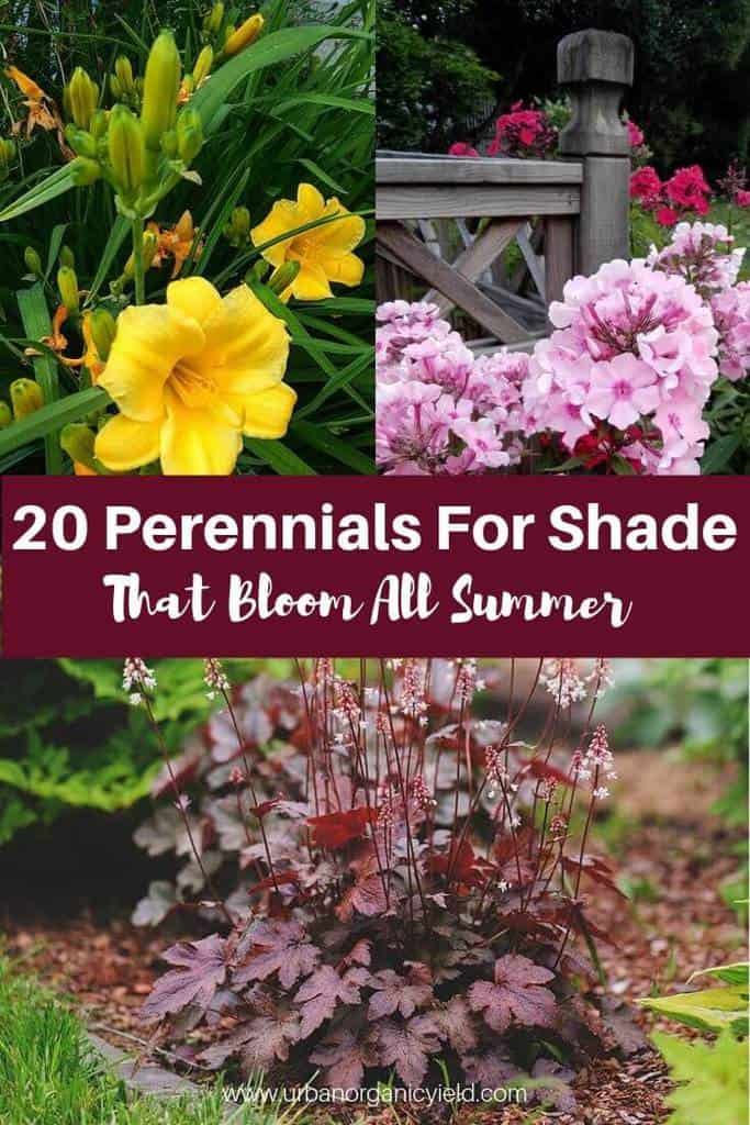 20 perennials for shade that bloom all summer (with pictures)