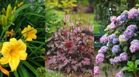 20 Perennials for Shade that Bloom All Summer