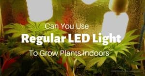 Can You Use Regular LED Light Bulbs To Grow Plants Indoors