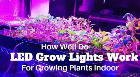 How Well Do LED Grow Lights Work For Growing Plants Indoor
