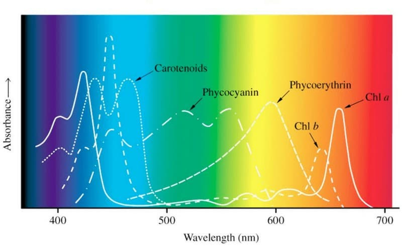 PAR-Wavelengths-and-absorbtion-levels