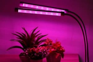 Calculate How Many Watts Per Square Foot For Led Grow Lights Of Grow Room