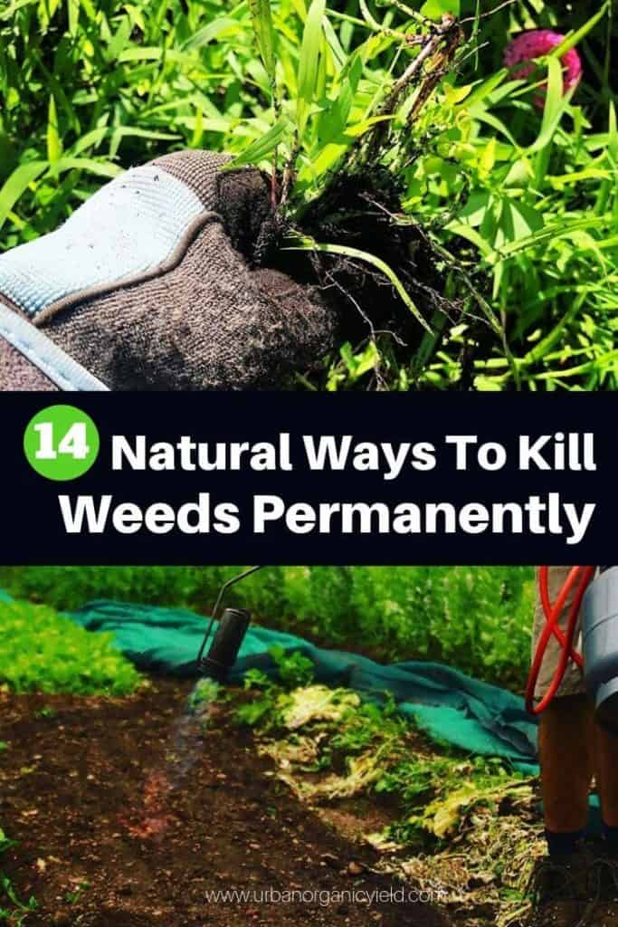 14 Natural Ways To Kill Weeds Permanently From Large Area (2)