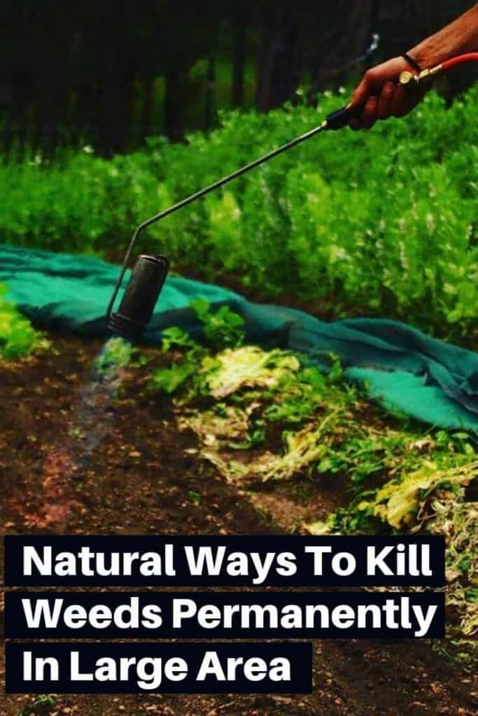 14 all Natural Ways To Kill Weeds Permanently From Large Area