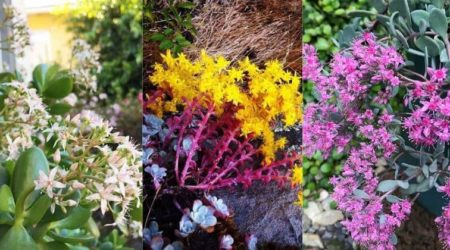 17 Flowering Succulents For Gorgeous Indoor Or Outdoor Display