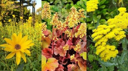 34 Amazing Yellow Perennial Flower Varieties For Your Garden