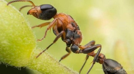 5 Effective Ways To Getting Rid Of Ants In Potted Plants Naturally