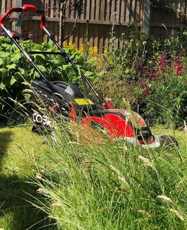 Best Time To Mow My Lawn
