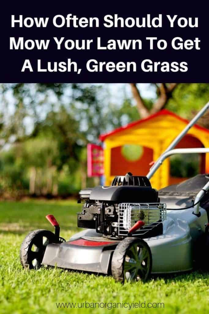 How Often Should You Mow Your Lawn To Get A Lush, Green Grass quickly (1)