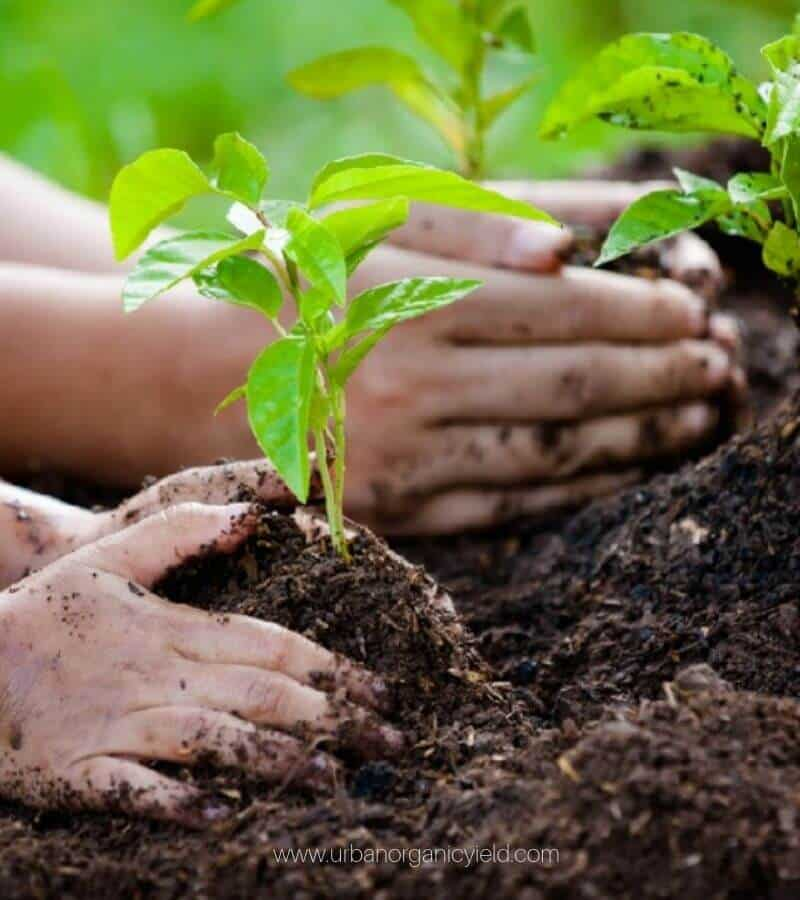 How To Keep Your Soil And Plants Healthy