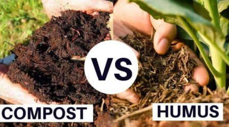Humus Vs Compost What's The Difference_ And Which Is Better