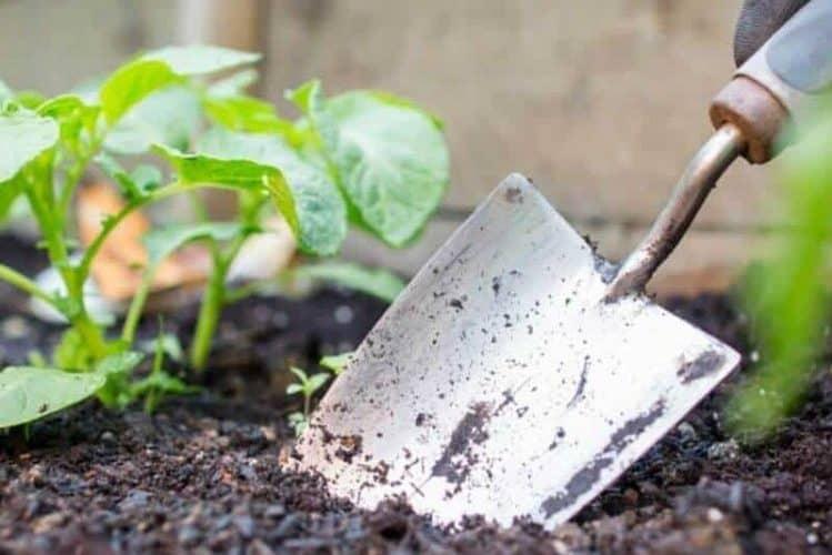 What Is A Humus Soil
