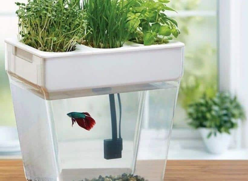 Additional Tips_ Maintaining Your Aquaponics System