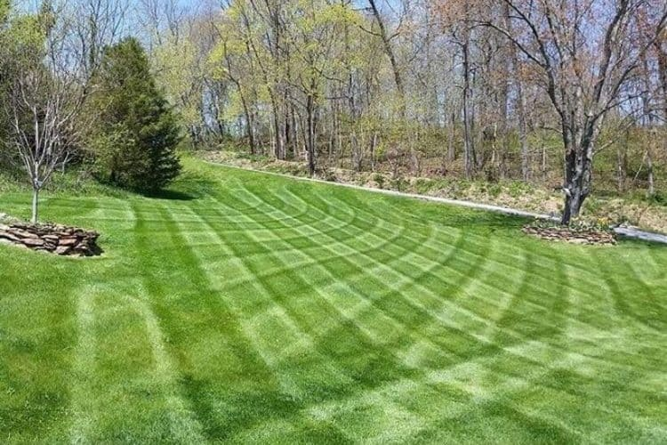 Can I Cut My Grass In A Checkerboard Pattern_Fertilizer Burn In Lawn Grass