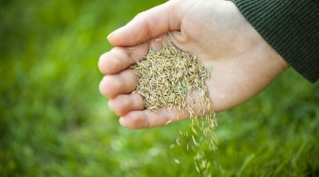 Does Grass Seed Go Bad And How Long You Can I Store Grass Seed Before It Expire