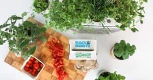 4 Best Indoor Aquaponics Kits To Grow Vegetables & Fish Together
