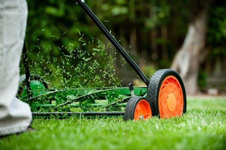 Using Reel Lawn Mower