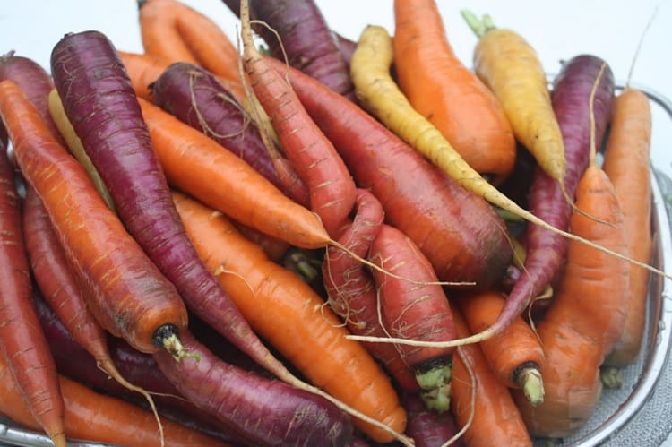 Choose The Best Carrot Varieties To Grow In Container
