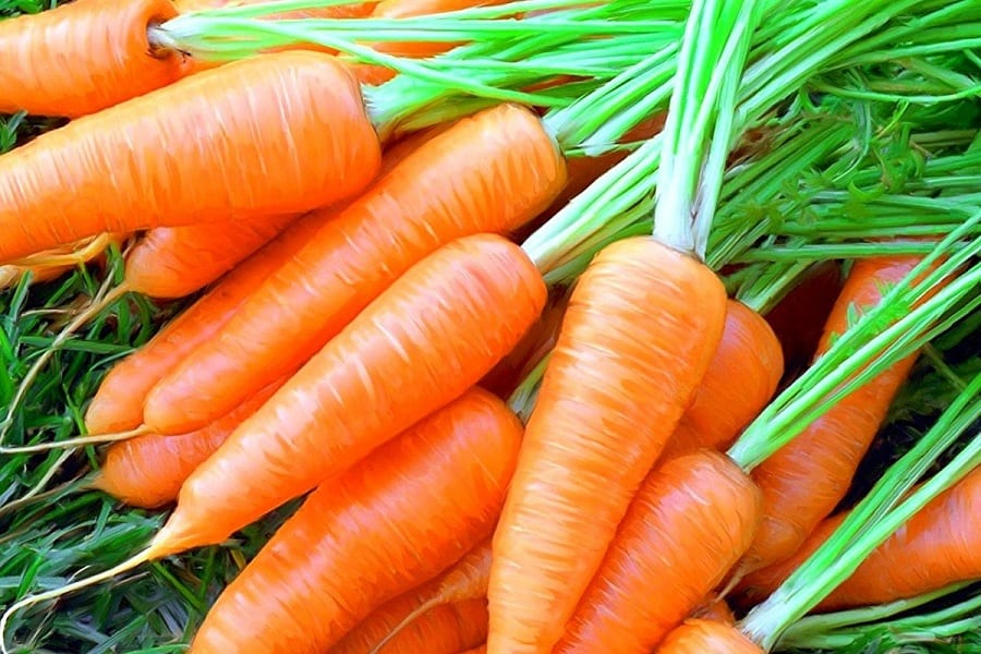 Growing Carrots In Containers: A Complete Guide On How To Plant And Care For Carrots Grown In Pots