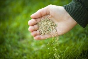 Does Grass Seed Go Bad And How Long You Can Store Grass Seed Before It Expire?