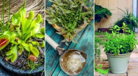 14 Amazing Indoor & Outdoor Plants That Actually Repel Flies Naturally