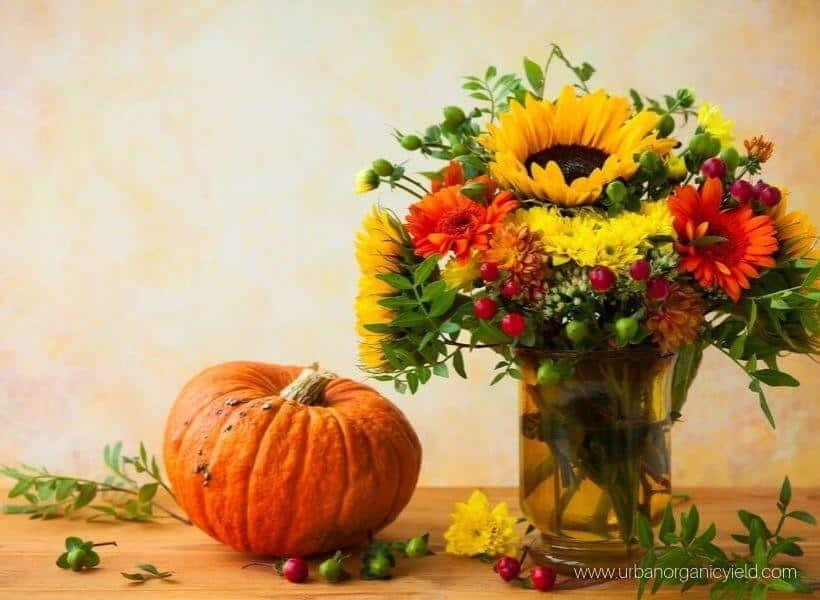 Enjoy your full harvest