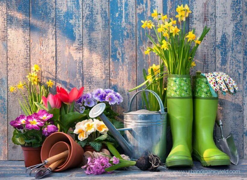 Invest in must-have garden tools