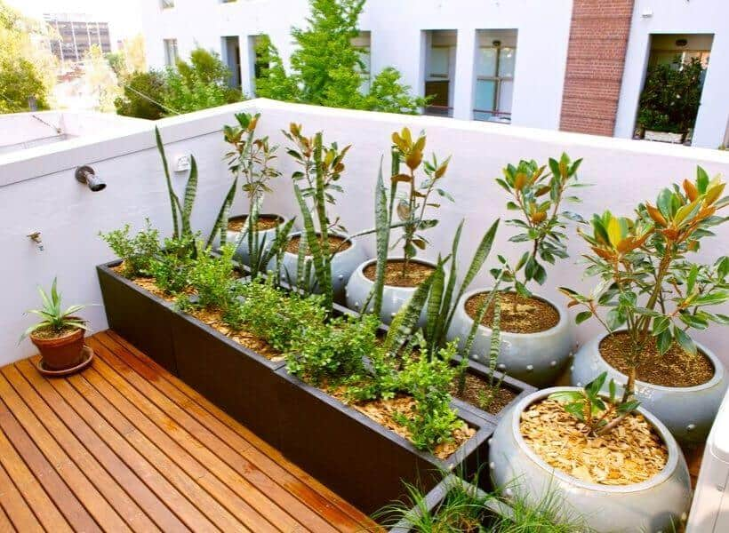 Plants Suited For Rooftop Gardens