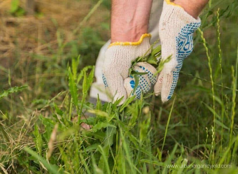 Remove the grass