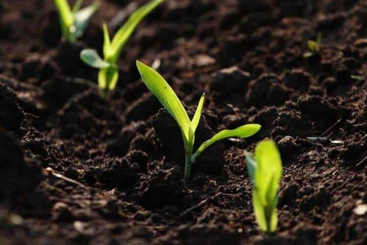 Use Premium Quality Potting Soil