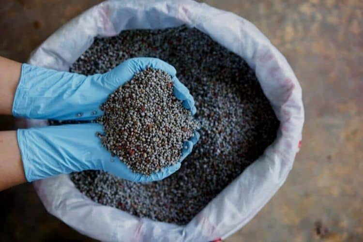 What Are The Pros And Cons Of Granular Fertilizer?