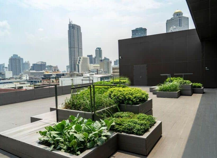 having a rooftop garden