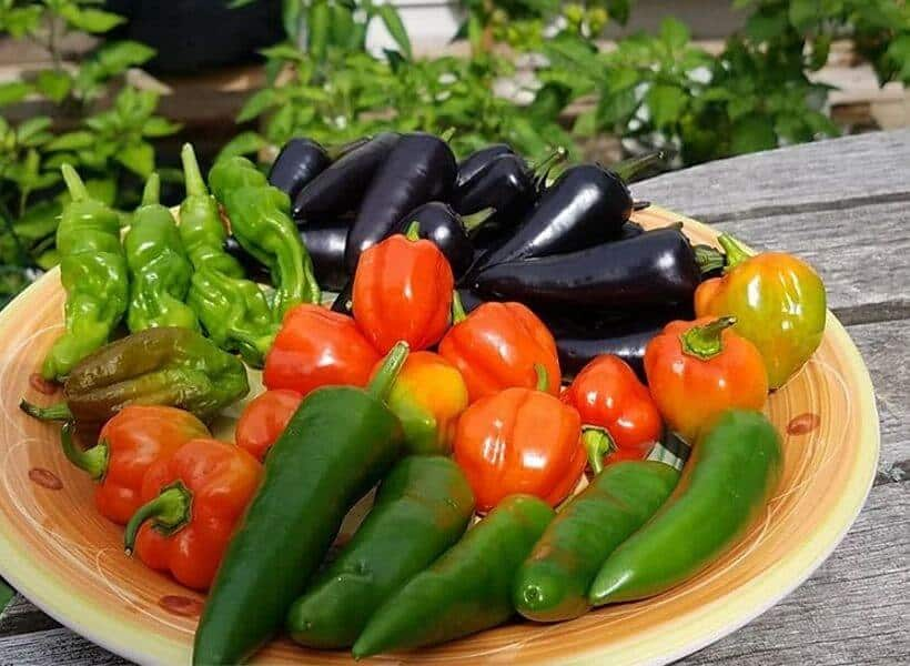 types Of Peppers Plants For Growing In Containers