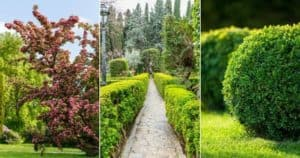 12 Best Low Growing Evergreen Shrubs For Front Of House