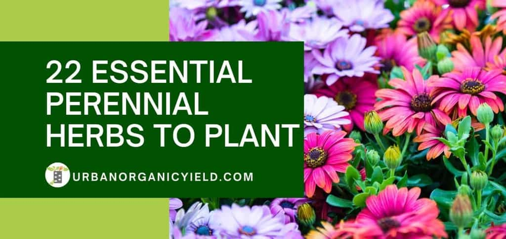 22 Essential Perennial Herbs To Plant Now And Enjoy Every Year