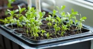 4 Best Seedling Heat Mats And Thermostats For Germination