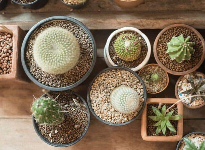 Are You Using Proper Container Size Or Type For A Cactus