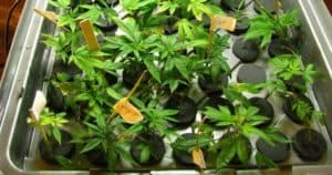 Best Cloning Machines_ Top 7 Aeroponic & Hydroponic Cloner To Propagate Plants