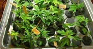 Best Cloning Machines_ Top 7 Aeroponic & Hydroponic Cloner To Propagate Plants